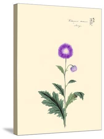 Kitsune Azami-May-Megata Morikaga-Stretched Canvas Print