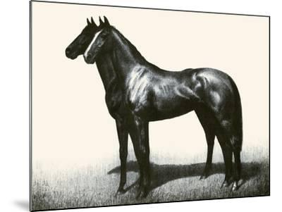 Omaha And Flares; A Brother Act-C.W. Anderson-Mounted Art Print