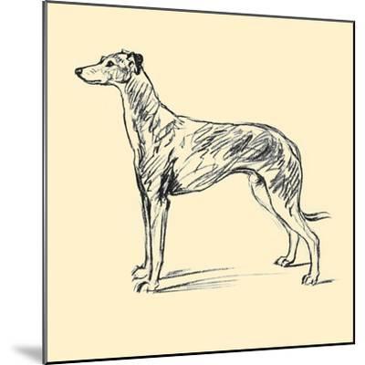 Radicome The Greyhound-Lucy Dawson-Mounted Art Print