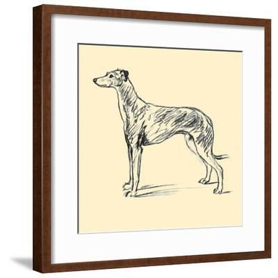 Radicome The Greyhound-Lucy Dawson-Framed Art Print