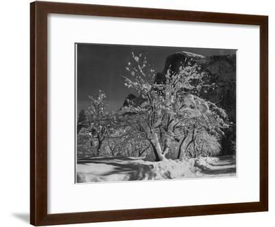 "Trees With Snow On Branches ""Half Dome Apple Orchard Yosemite"" California. April 1933. 1933-Ansel Adams-Framed Premium Giclee Print"