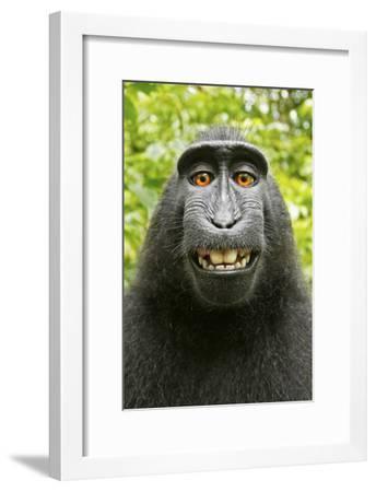 Monkey Selfie-David Slater-Framed Photographic Print