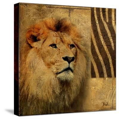 Elegant Safari II (Lion)-Patricia Pinto-Stretched Canvas Print