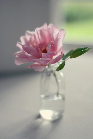 Evening Blooms-Sarah Gardner-Framed Photo