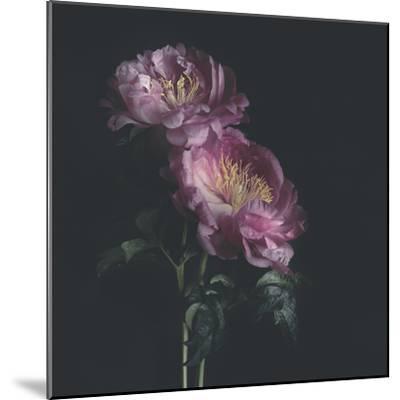 Dark Florals-Sarah Gardner-Mounted Photo