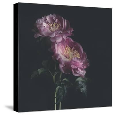 Dark Florals-Sarah Gardner-Stretched Canvas Print