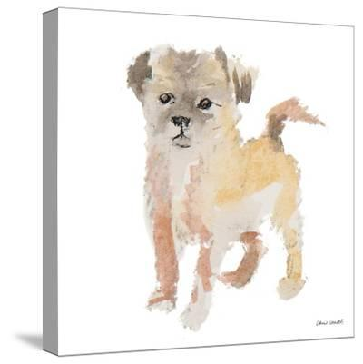 Furry Paws-Lanie Loreth-Stretched Canvas Print