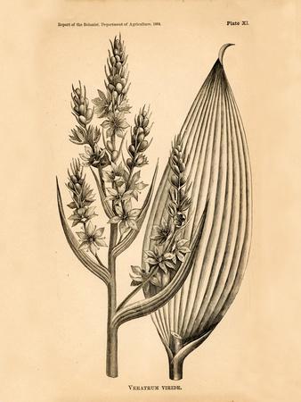 Vintage Botanical IV-Gregory Gorham-Framed Art Print