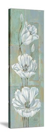 Florentine Tulips-Paul Brent-Stretched Canvas Print