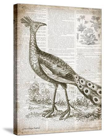 Vintage Bird I-Gwendolyn Babbitt-Stretched Canvas Print