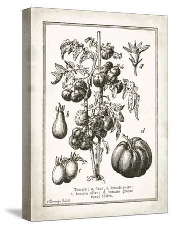 French Tomatoes-Gwendolyn Babbitt-Stretched Canvas Print