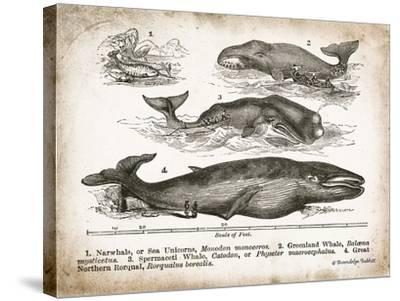 Antique Whales II-Gwendolyn Babbitt-Stretched Canvas Print