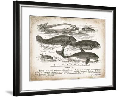 Antique Whales I-Gwendolyn Babbitt-Framed Art Print