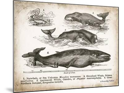 Antique Whales II-Gwendolyn Babbitt-Mounted Art Print
