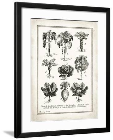 French Cabbage-Gwendolyn Babbitt-Framed Art Print