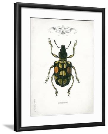 Beetle IV-Gwendolyn Babbitt-Framed Art Print