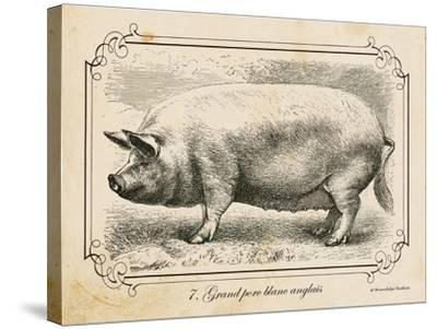 Farm Pig II-Gwendolyn Babbitt-Stretched Canvas Print