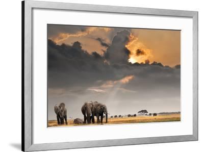 African Sunset with Elephants-Oleg Znamenskiy-Framed Photographic Print