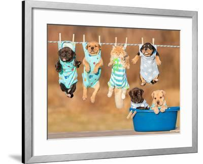 Funny Group of American Staffordshire Terrier Puppies with Little Red Cat Hanging on a Clothesline-Grigorita Ko-Framed Photographic Print