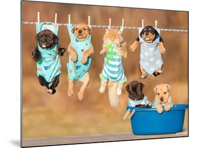 Funny Group of American Staffordshire Terrier Puppies with Little Red Cat Hanging on a Clothesline-Grigorita Ko-Mounted Photographic Print