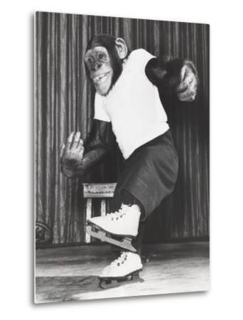 Monkey on Ice Skates-Everett Collection-Metal Print