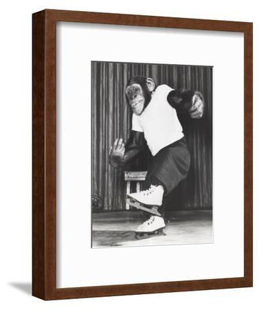 Monkey on Ice Skates-Everett Collection-Framed Photographic Print