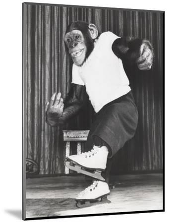 Monkey on Ice Skates-Everett Collection-Mounted Photographic Print