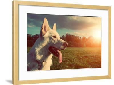 Gorgeous Large White Dog in a Park, Colorised Image-ABO PHOTOGRAPHY-Framed Photographic Print