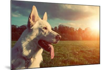 Gorgeous Large White Dog in a Park, Colorised Image-ABO PHOTOGRAPHY-Mounted Photographic Print