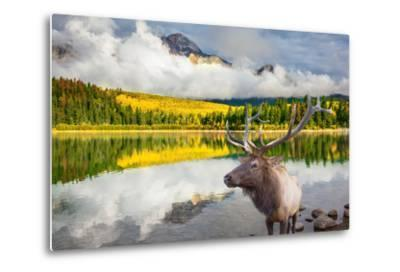 Jasper National Park in the Rocky Mountains of Canada. Proud Deer Antlered Stands on the Banks of T-kavram-Metal Print