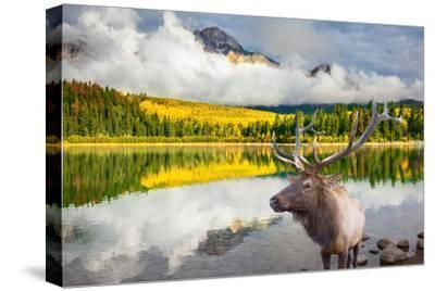Jasper National Park in the Rocky Mountains of Canada. Proud Deer Antlered Stands on the Banks of T-kavram-Stretched Canvas Print