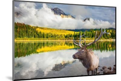Jasper National Park in the Rocky Mountains of Canada. Proud Deer Antlered Stands on the Banks of T-kavram-Mounted Photographic Print