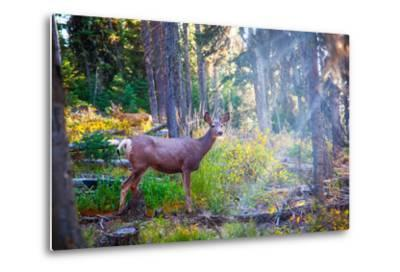 Deer Standing in Sunshine in Forest. Yellowstone National Park, Wyoming.-Lynn Y-Metal Print
