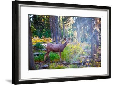 Deer Standing in Sunshine in Forest. Yellowstone National Park, Wyoming.-Lynn Y-Framed Photographic Print
