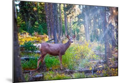 Deer Standing in Sunshine in Forest. Yellowstone National Park, Wyoming.-Lynn Y-Mounted Photographic Print