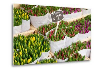 Tulip Flowers from Holland for Sale , Amsterdam Floral Market.-neirfy-Metal Print