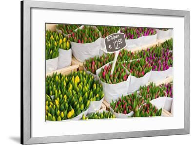 Tulip Flowers from Holland for Sale , Amsterdam Floral Market.-neirfy-Framed Photographic Print
