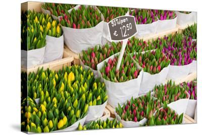 Tulip Flowers from Holland for Sale , Amsterdam Floral Market.-neirfy-Stretched Canvas Print