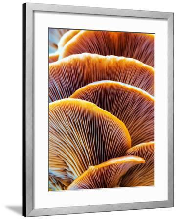 Wild Winter Forest Tree Mushroom in the Woods of Bavaria in Germany. Picture of the Fungi with Love-Andreas Zerndl-Framed Photographic Print