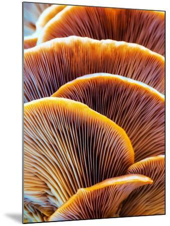 Wild Winter Forest Tree Mushroom in the Woods of Bavaria in Germany. Picture of the Fungi with Love-Andreas Zerndl-Mounted Photographic Print