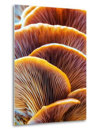 Wild Winter Forest Tree Mushroom in the Woods of Bavaria in Germany. Picture of the Fungi with Love-Andreas Zerndl-Metal Print