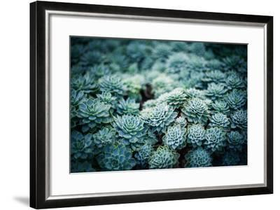 Rustic Macro Shot of Cactus - Tropical Plant with Shallow Depth of Field.Natural Background with Su- NaturePhotography-Framed Photographic Print