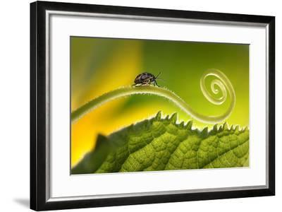 Beautiful Insects on a Leaf Close-Up, Beautiful Glowing Background, Beautiful Light, Spiral Plant,-Laura Pashkevich-Framed Photographic Print