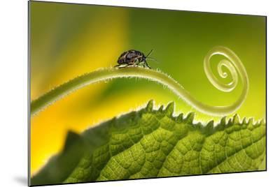 Beautiful Insects on a Leaf Close-Up, Beautiful Glowing Background, Beautiful Light, Spiral Plant,-Laura Pashkevich-Mounted Photographic Print