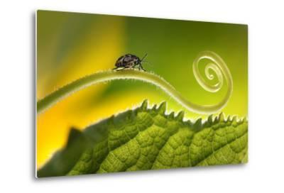 Beautiful Insects on a Leaf Close-Up, Beautiful Glowing Background, Beautiful Light, Spiral Plant,-Laura Pashkevich-Metal Print