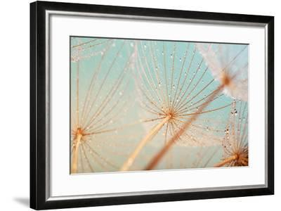Dandelion Flower with Water Drops-Aleksandar Grozdanovski-Framed Photographic Print