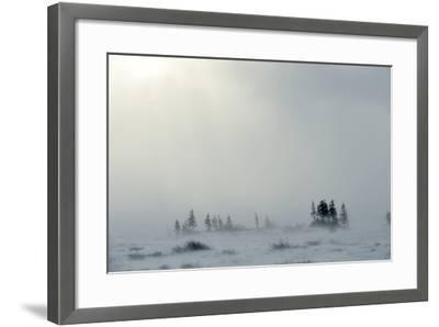 Snowstorm in Tundra Landscape with Trees. Low Visibility Conditions due to a Snow Storm in Tundra F-Sergey Uryadnikov-Framed Photographic Print