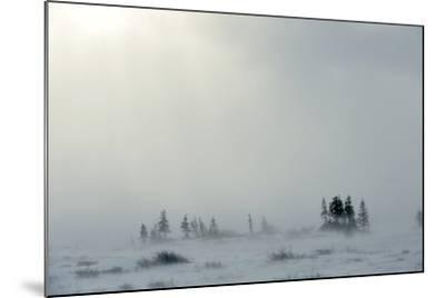 Snowstorm in Tundra Landscape with Trees. Low Visibility Conditions due to a Snow Storm in Tundra F-Sergey Uryadnikov-Mounted Photographic Print