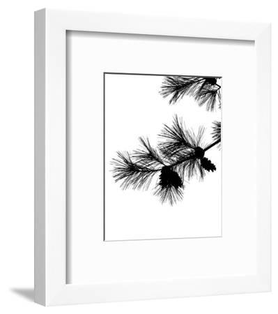 Pine Soliloquy I-Monika Burkhart-Framed Photo