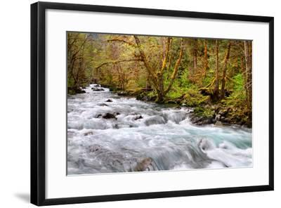Rainforest River I-Douglas Taylor-Framed Photo